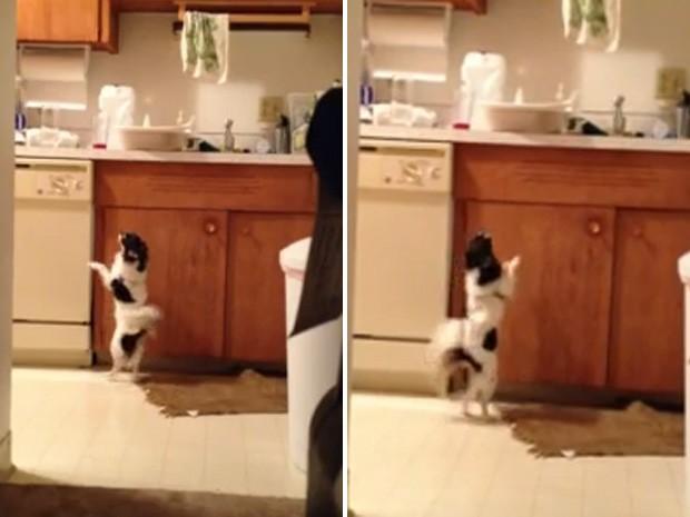 Chihuahua parece dançar ao som da música enquanto persegue o peru (Foto: Reprodução)