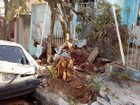 Caminhão bate em carro, derruba árvore e invade casa em Divinópolis