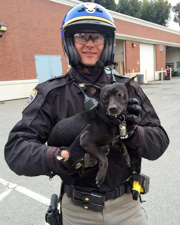 Após ser capturado, o chihuahua foi levado para um abrigo de animais de San Francisco (Foto: California Highway Patrol/AP)