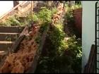 Vídeos mostram desperdício de água em duas áreas do Grande Recife