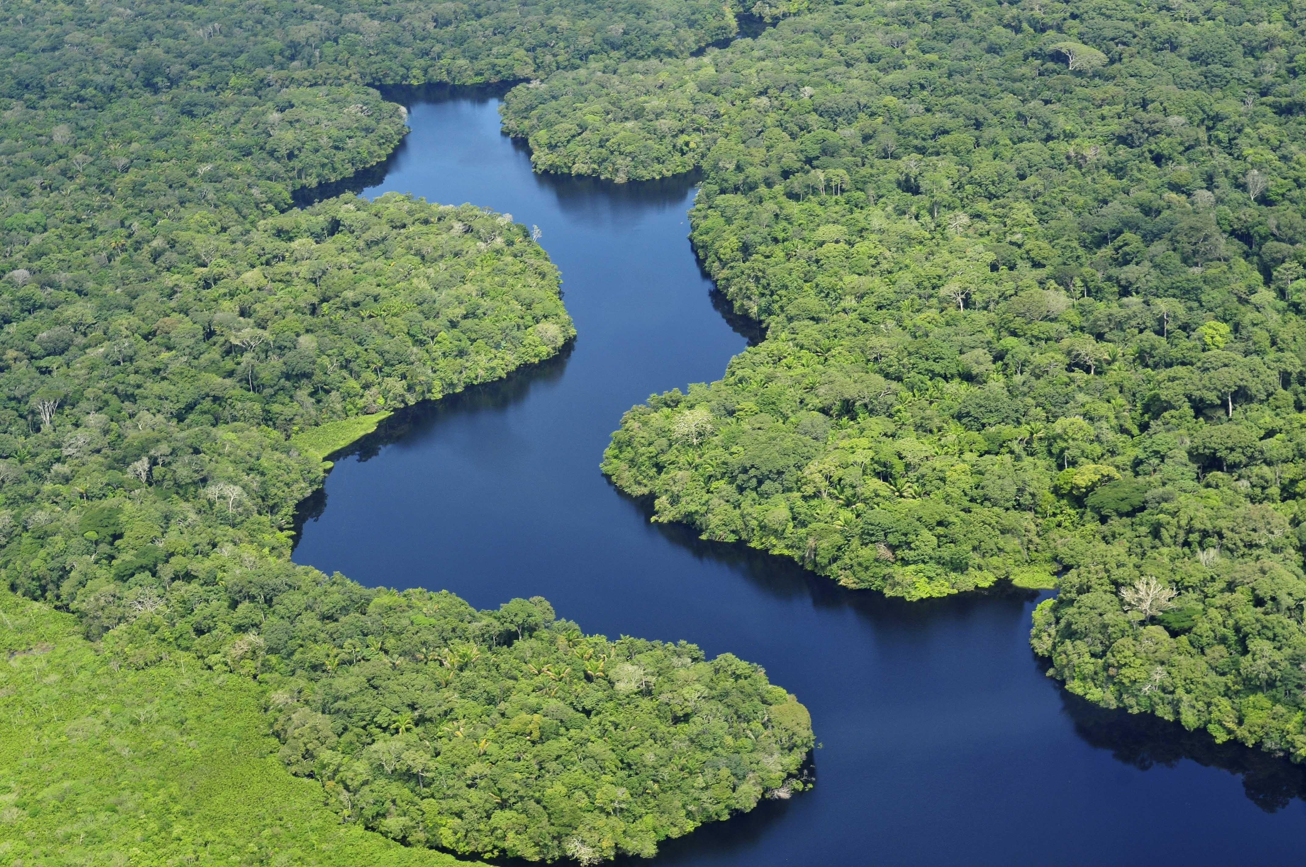 Cerca de um quinto do total de espécies do mundo está no Brasil (Foto: Wikimedia Commons)