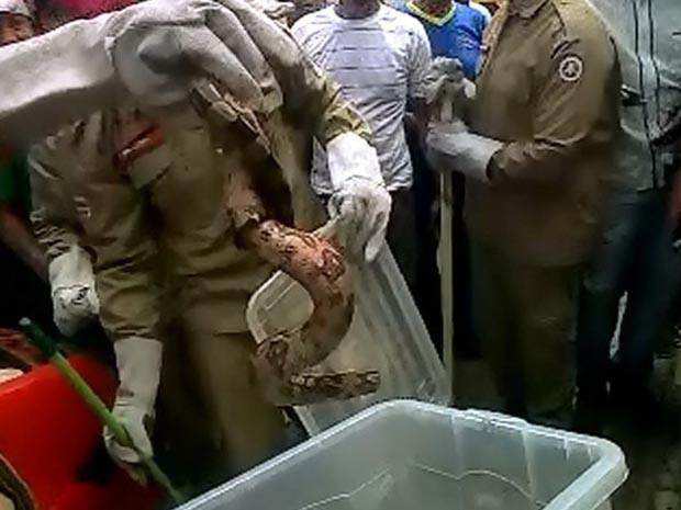 Cobra é retirada de veículo (Foto: Marcus Augusto/ Site Voz da Bahia)