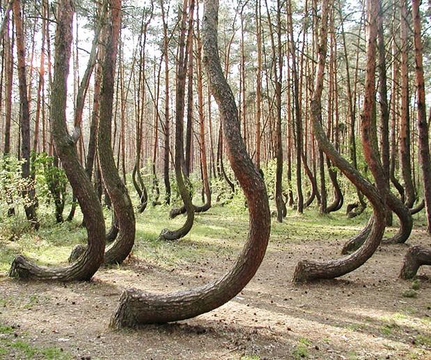 Floresta curvada, na Polônia, é um mistério até hoje (Foto: Reprodução)