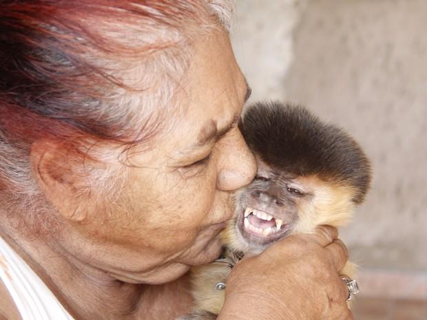 Macaco-prego foi criado por família de São Carlos durante 37 anos (Foto: Fabio Rodrigues/G1)