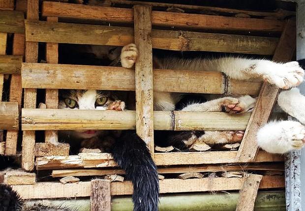 Um caminhão com carregamento de gatos vivos que tinham como destino o mercado de carne local foi apreendido por autoridades em Hanói, no Vietnã (Foto: STR/AFP/Getty Images)