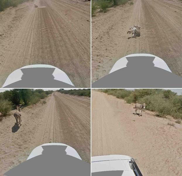 Na sequencia de imagens, o Google mostra que o carro se aproxima do burro, que está deitado na estrada. Depois, o burro se levanta e se afasta para a passagem do veículo. Uma foto tirada da parte de trás do carro mostra o animal em pé. (Foto: Reprodução)