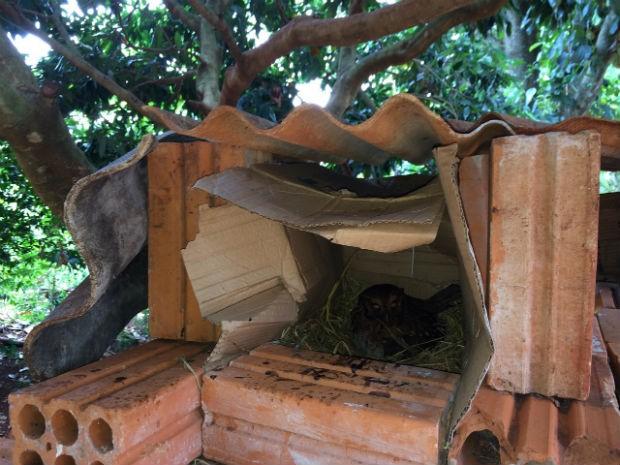 Ninho foi feito com caixa de papelão e tijolos (Foto: Argeu Almeida/ RPCTV)