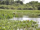 'Lei do Pantanal' prevê restrições à pesca por 5 anos e a novas estradas