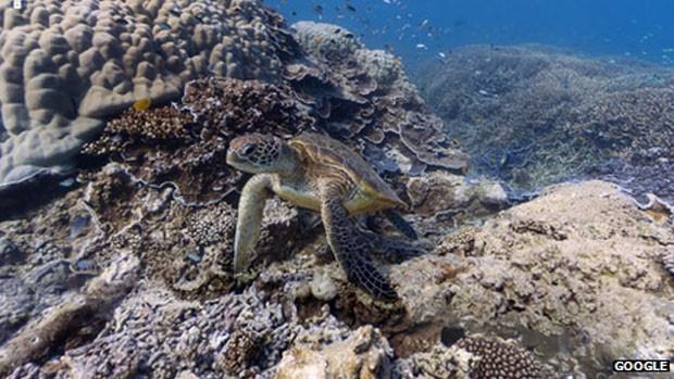 Imagem de coral feita pelo Google para serviço de mapas (Foto: BBC)