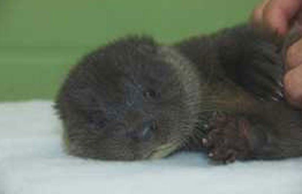Filhote ganhou o nome de Murkle (Foto: Divulgação/Scottish SPCA)