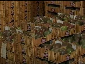 Exportação de mangas do Vale do São Francisco (Foto: Reprodução/TV Grande Rio)