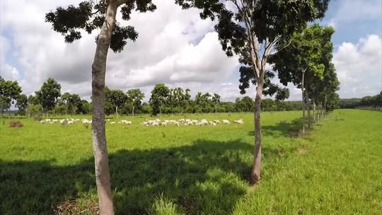 Sistema integrado de pecuária e agricultura pode ser expandido no MA