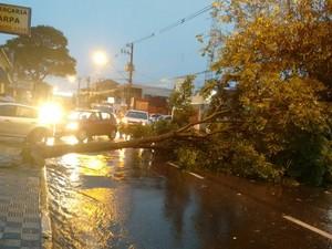 Árvore caiu com a chuva e interditou a Av Siqueira Campos, no centro de Jacareí (Foto: Gustavo Chaves / Vanguarda Repórter)