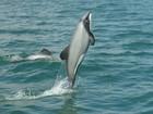 Áreas de proteção marinhas ajudam a preservar espécies, diz estudo