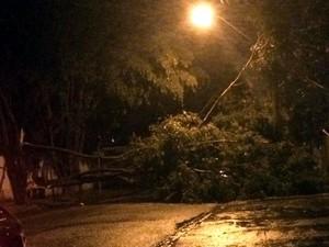 Árvore caiu na avenida Rio Claro, na Vila Nova Sorocaba (Foto: Lais Silva/Arquivo pessoal)