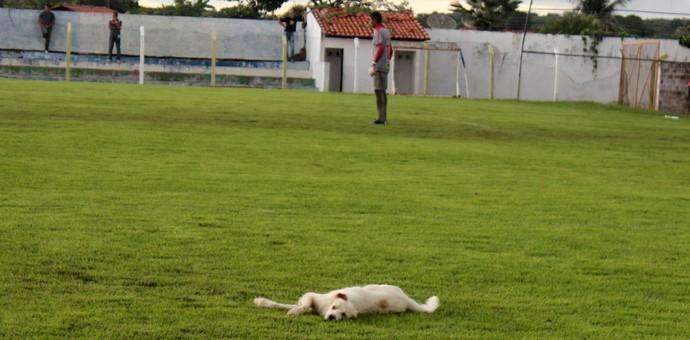 Cachorro posa para fotos em semifinal no Piauí (Foto: Josiel Martins )