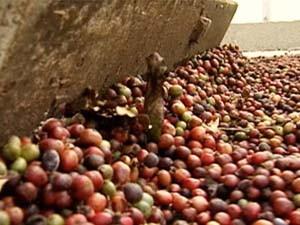 Confira a cotação do café no Espírito Santo. (Foto: Reprodução/TV Gazeta)