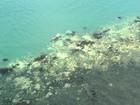Grande Barreira de Coral australiana perdeu 93% da cor, dizem cientistas