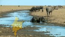 Bom Dia Brasil destaca a seca no MA (Reprodução / TV Mirante)