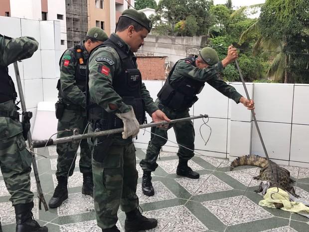 Polícia levou 30 minutos para capturar jacaré que apareceu na porta de uma casa, em João Pessoa (Foto: Walter Paparazzo/G1)