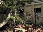 Árvore cai e deixa três feridos em campus da UFC em Fortaleza