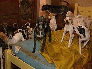 Cães vivem dentro do quarto da aposentata Miriam Barros, em Barretos, SP (Foto: Reprodução/ EPTV)