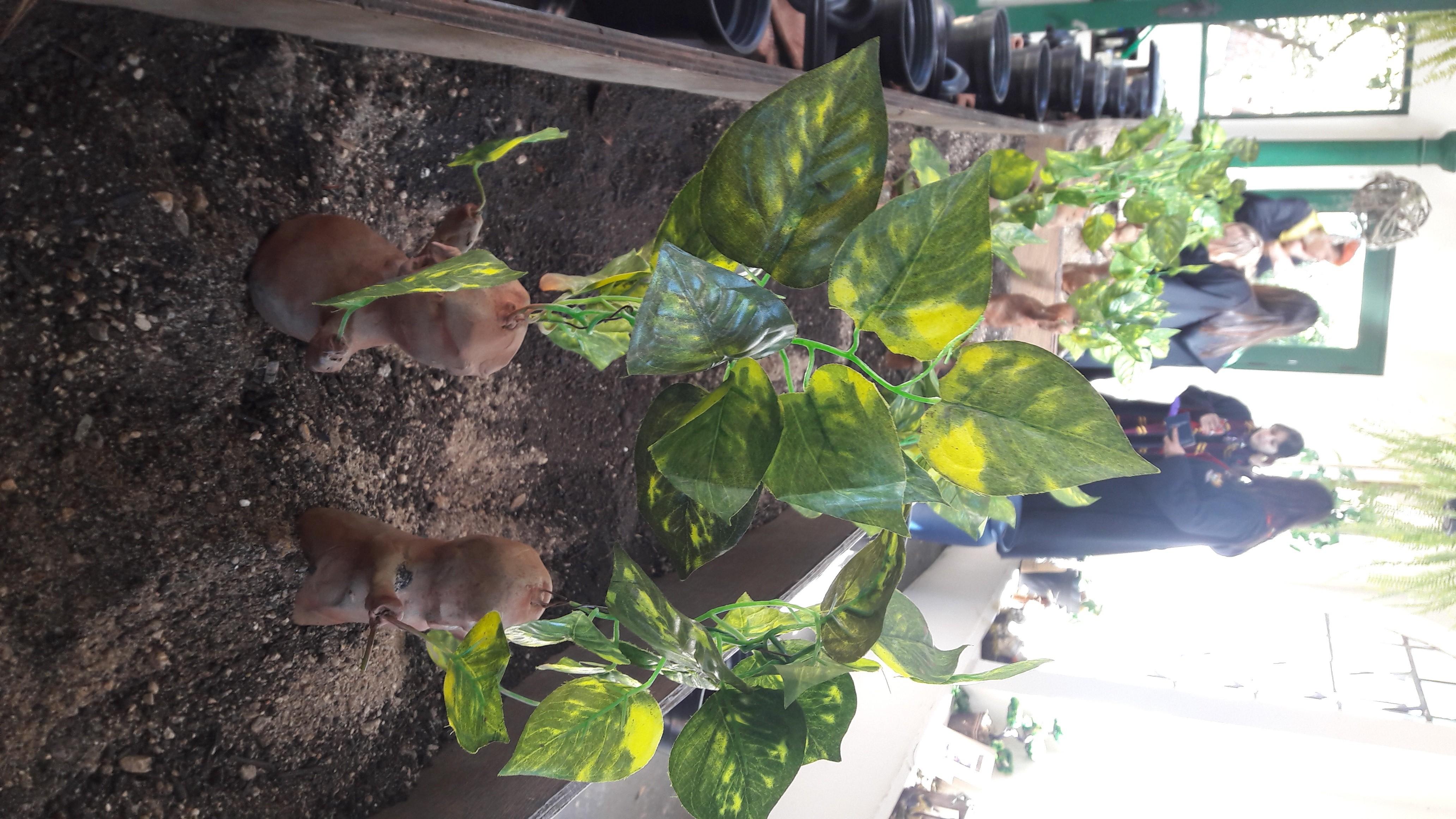 Mandrágoras na aula de Herbologia (Foto: Isabela Moreira/Revista Galileu)
