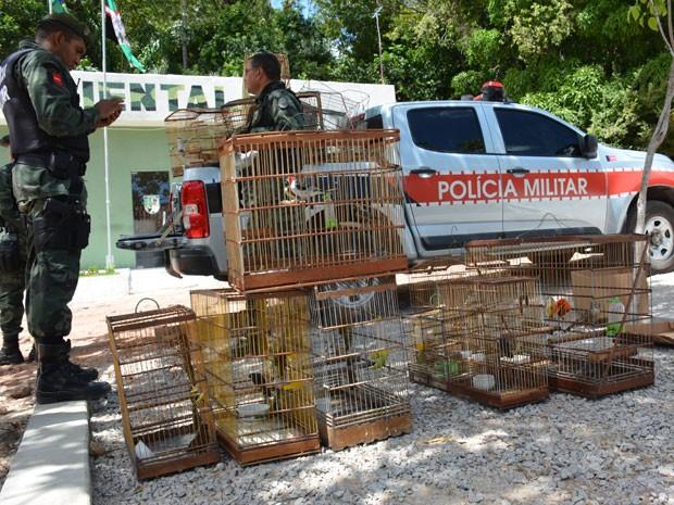 PM apreende aves em João Pessoa  (Foto: Walter Paparazzo/G1)