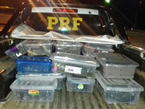 Tartarugas e cágados estavam dentro de caixas em veículo, em Goiás (Foto: Divulgação/PRF)