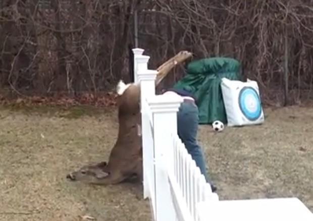 Brian Kelley libertou veado preso em cerca após ser avisado pela esposa Kate (Foto: Reprodução/YouTube/BPK77)