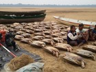 Operação resgata 115 tartarugas e prende cinco pessoas no Sul de RR