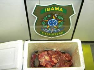 A carne da tartaruga apreendida pelo Ibama será incinerada (Foto: Luiz Paulo Albarelli/Divulgação Ibama)