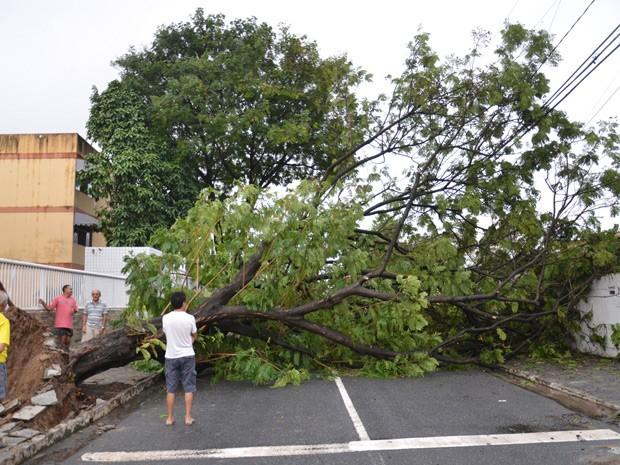 Árvore caiu e interditou uma das principais ruas dos Bancários; moradores também ficaram sem energia elétrica (Foto: Walter Paparazzo/G1)