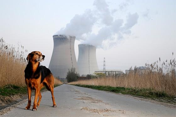 Cão exposto na poluição  (Foto: thinkstockphotos)