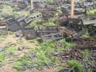 Mulheres do MST destroem 1,2 milhão de mudas de pinus da Araupel, no PR
