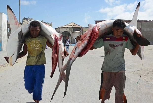 Em foto de fevereiro de 2013, pescadores carregam tubarões sobre os ombros em uma rua de Mogadíscio, na Somália (Foto: Mohamed Abdiwahab/AFP)
