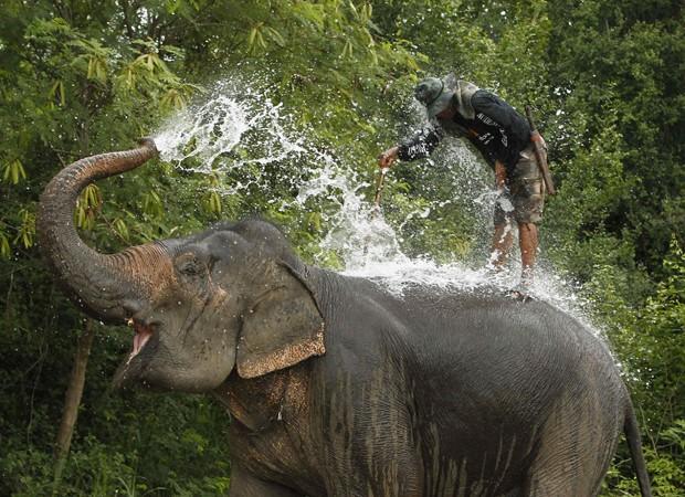 Elefante se molha e atinge tratador em região da Tailândia (Foto: Sukree Sukplang/Reuters)