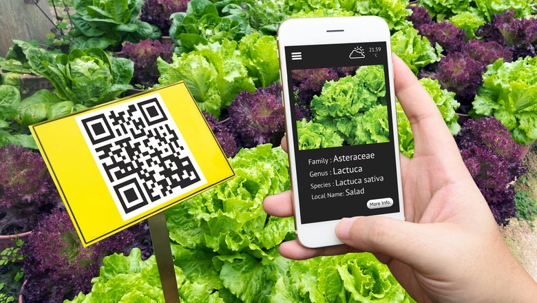 rastreabilidade-rastrear-rastreamento-app-aplicativo-qr-code-etiqueta-tecnologia-celular-fazenda (Foto: Thinkstock)