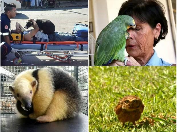 Reveja casos de animais que foram notícias no ano de 2015 em cidades da região (Foto: Montagem/G1)