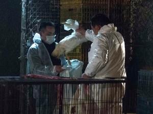 Agentes de saúde da China recolhem aves mortas em Shangai nesta sexta-feira (5). (Foto: AFP)