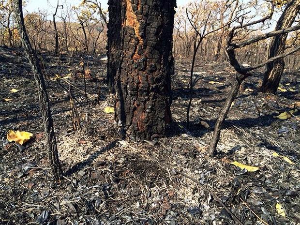 Incêndio atinge o Parque Estadual Serra Azul, em Barra do Garças (MT), desde o último final de semana. (Foto: Diego Hurtado/TVCA)