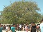 Concurso de produtos de tamarindo acontece durante festa em Cabloco