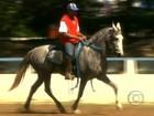 Exposição em SP apresenta os  melhores cavalos da raça mangalarga