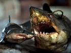 ONG denuncia grande fábrica de processamento de tubarões na China