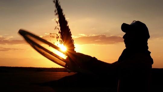 Agronegócio brasileiro emprega 19 milhões de pessoas