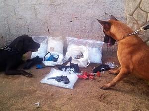Cães farejadores contribuiram para a apreensão de drogas (Foto: Reprodução RC24H)