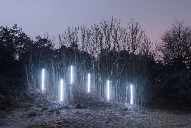 Fotos noturnas revelam fantástica arquitetura da floresta (Foto: Alexis Pichot)