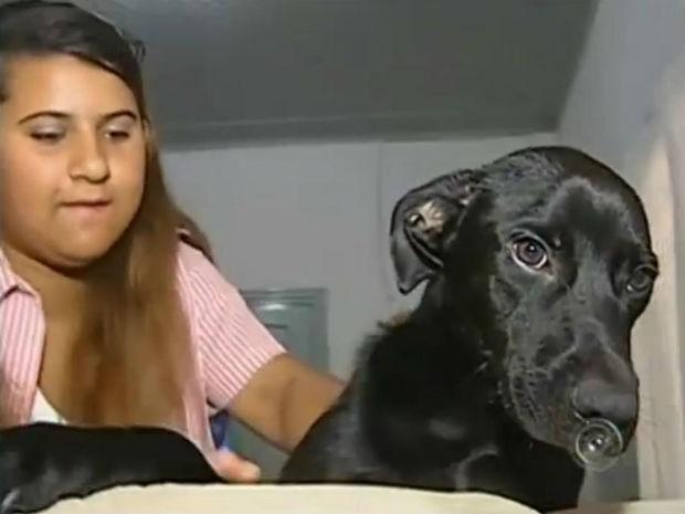 Mordomia para os cães (Foto: Reprodução/TV TEM)