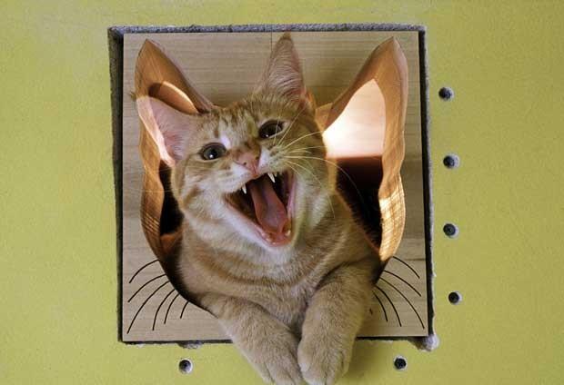 Gato Tom em uma das portas planejadas e personalizadas para os felinos no condomínio (Foto: Cortesia Bob Walker/ AP)