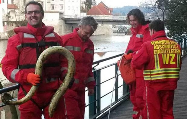 Equipe de bombeiros encontrou apenas uma abóbora com formato curioso (Foto: Reprodução/Facebook/FF Steyr)